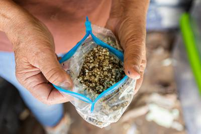 A baggie containing some of the plastic pellets that Diane Wilson and members of the San Antonio Bay Estuarian Waterkeeper have collected since 2016. They have amassed more than 2,000.